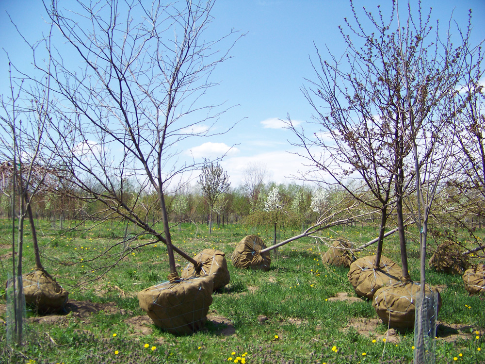 Our Spring Dig; Get your trees from a local supplier!