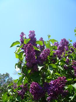 Aspinall S Landscaping And Tree Nursery Chittenango Ny